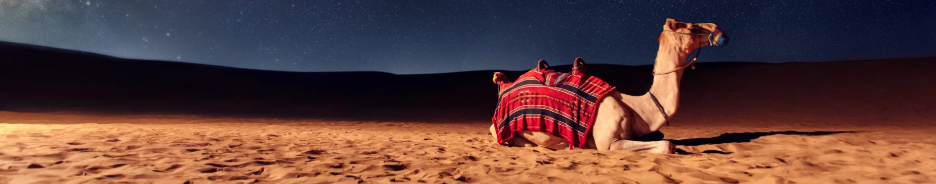 Camel sitting in sand against night sky.