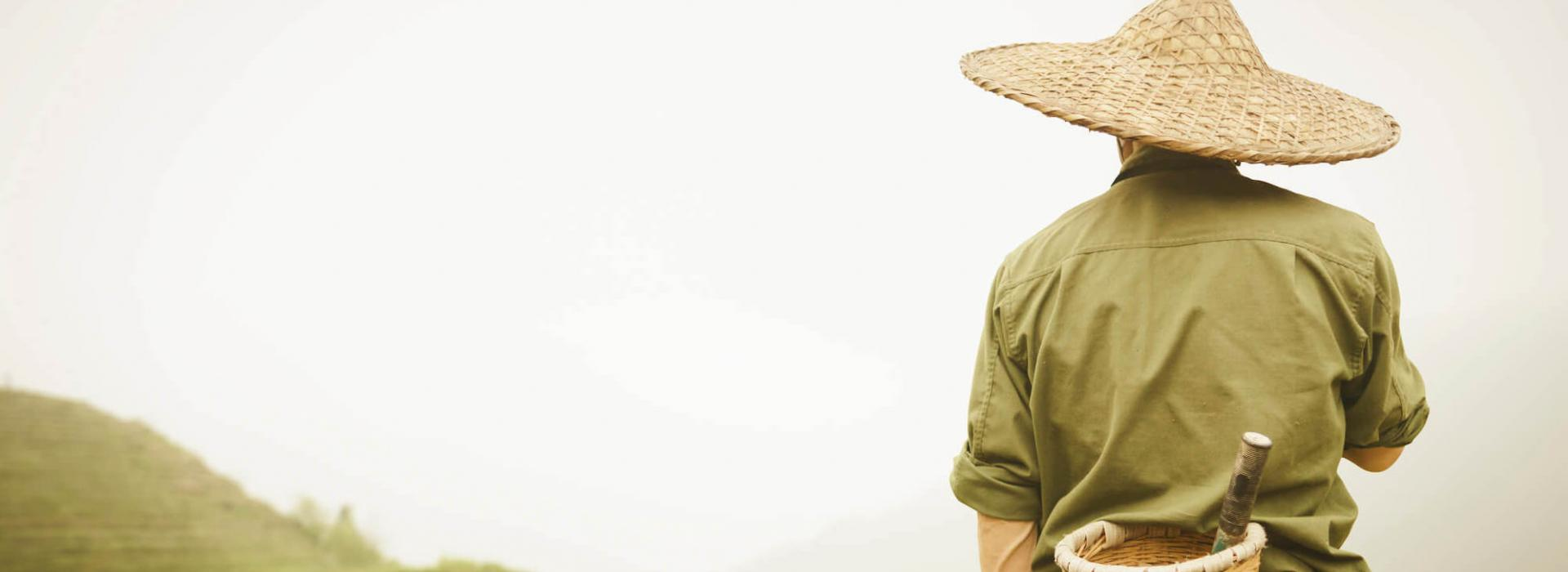 Man in a traditional hat overlooking rice paddy from up high.